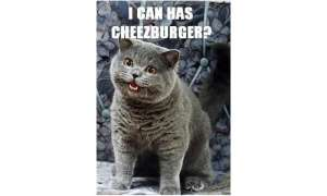LOL-Katzen, Memes, Can I has Cheezburger