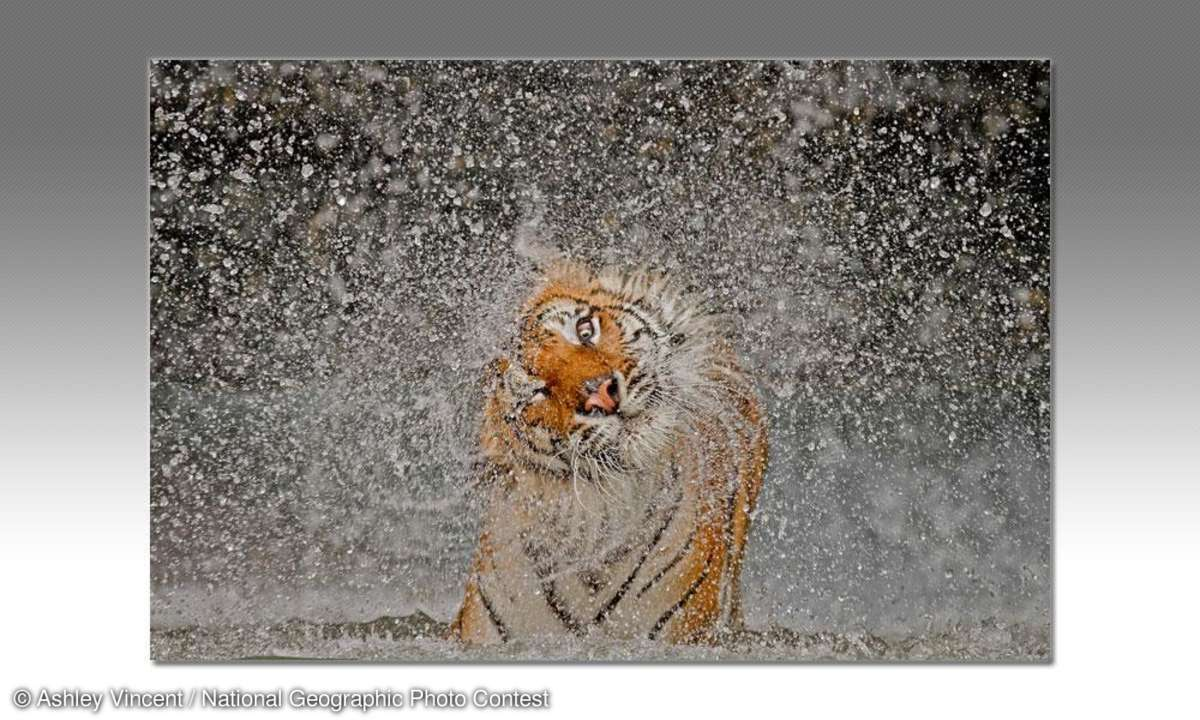 Ashley Vincent / National Geographic Photo Contest