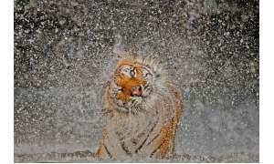 The Explosion by Ashley Vincent / National Geographic Photo Contest